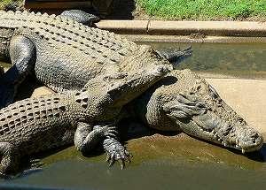 crococuple.jpg