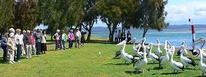 pelican03.jpg